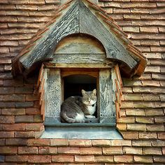 Cat on a roof......and cat house?
