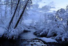 Hi-Def Pics - Gorgeous Winter Trees (10 pics) - My Modern Metropolis