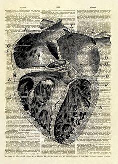 Human Heart Chambers Diagram Dictionary Art Print