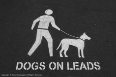 Dogs on Leads
