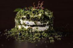 #moss #mech #leśnymech #runoleśne #ciastomech #ciastorunoleśne #jagody #las #ciasto #ediablemoss #cakemoss