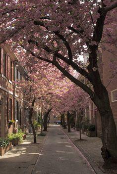 South Philly, (Philadelphia), Pennsylvania, USA dappled (by Incandenza) Miss those trees! Rhode Island, Nebraska, Oklahoma, Wyoming, Beautiful World, Beautiful Places, Beautiful Streets, Beautiful Scenery, Amazing Places