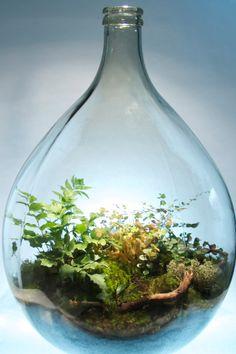 Items similar to Round Demijohn Terrarium on Etsy Bottle Plant, Bottle Terrarium, Plant In Glass, Moss Terrarium, Bottle Garden, Aquatic Plants, Air Plants, Garden Plants, Indoor Plants