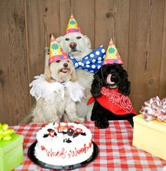 In this gallery is a huge collection of happy birthday dog images and lucky pooches whose humans throw birthday parties for them, with the presents, cakes a Happy Birthday Dog, Puppy Birthday, Animal Birthday, Special Birthday, Worst Birthday Ever, Happy New Year Funny, Puppy Party, Funny Animal Videos, Animal Party