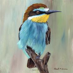 "Daily Paintworks - ""European Bee - Eater"" - Original Fine Art for Sale - © Janet Graham"