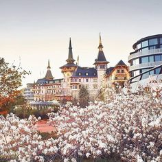 Love #Zurich! Spring has blossomed at the majestic @thedoldergrand.  @Regrann from @forbestravelguide  #hometown  #ndwrsworld  #travel #traveling #TFLers #vacation #visiting #instatravel #instago #instagood #trip #holiday #photooftheday #fun #travelling #tourism #tourist #instapassport #instatraveling #igtravel