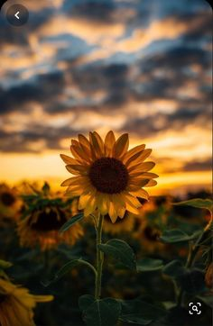 Image about aesthetic in nature by Ivna Alina - pix wallpapers Sunflower Pictures, Sunflower Wallpaper, Kinds Of Salad, Wallpaper Quotes, Wallpaper Wallpapers, Iphone Wallpaper, Aesthetic Wallpapers, Flower Power, Free Images