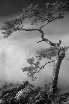Tree / Black and White Photography by Tomasz Dziedzic 4k Photography, Landscape Photography, Photo Hacks, Nature Landscape, All Nature, Photo B, Black N White Images, Belle Photo, Black And White Photography