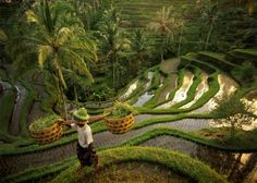 On a morning walk around Uma Ubud, observe the ancient tradition of terrace farming.