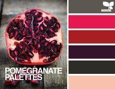 an allium-inspired color palette // pink, purple, green, pastel, allium sphaerocephalon