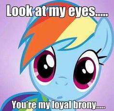 My Little Brony - Friendship is Magic - my little pony, friendship is magic, brony - Cheezburger - Yes, yes I am! Mlp My Little Pony, My Little Pony Friendship, Rainbow Dash, Mlp Memes, Little Poney, Mlp Pony, Twilight Sparkle, Mlp Twilight, Fluttershy