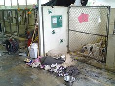 Pinellas County Humane Society is Flooded and is offering $ 25 off adoptions and they are in need of volunteers/fosters