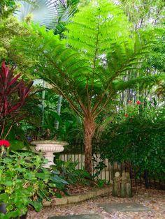 backyard designs – Gardening Ideas, Tips & Techniques Ferns Garden, Sky Garden, Garden Trees, Trees To Plant, Back Garden Landscaping, Florida Landscaping, Tropical Landscaping, Exotic Plants, Tropical Plants
