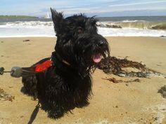 Louis on Whitley Bay beach