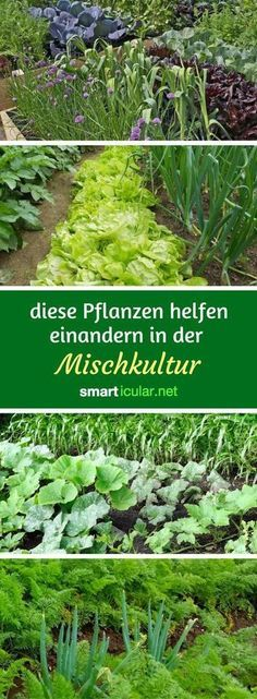Mit den richtigen Beetnachbarn werden deine Pflanzen gesünder, stärker und ert… With the right bed neighbors, your plants become healthier, stronger and more productive – without any artificial fertilizer or pesticides. Garden Types, Herb Garden Design, Vegetable Garden Design, Vegetable Gardening, Diy Garden Projects, Diy Garden Decor, Garden Decorations, Outdoor Projects, Pallet Projects