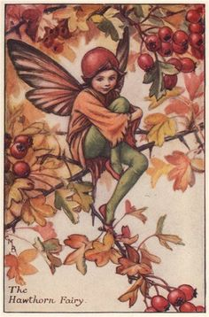 FLOWER FAIRIES/BOTANICALS: The Hawthorn Fairy; This is an original vintage Cicely Mary Barker Flower fairies colour print. It is not a modern reproduction, c1935; approximate size 11.5 x 7.5cm, 4.5 x 2.75 inches