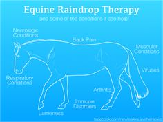 Equine Raindrop Therapy is the application of a series of therapeutic-grade essential oils to certain areas of the horse's body. The oils are then worked into the skin using massage-like strokes. Raindrop Therapy aligns the spine, boosts the immune system, and helps release toxins from the body. I am certified in Equine Raindrop Therapy and service Hendricks County, Indiana and the surrounding areas.