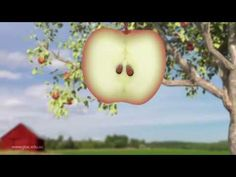 Apple life cycle - YouTube