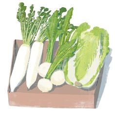 #radish #chinesecabbage #turnip #vegetables #vegetarian #green #food #life #love #lifestyle #instagood #illustration #illustrator #delicious #イラストレーション #イラスト