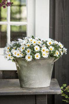 Floral Arrangement ~ #daisies in old pot. Simple but so charming. #centerpiece #BoltonBuilders