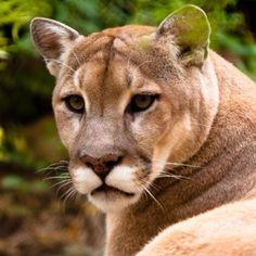 77 rencontre rencontrer cougars des  En lire plus Le parc en ligne : Réservez maintenant notre classement des meilleurs sites.