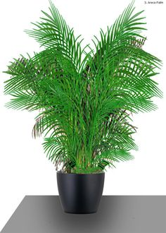 purifying house plants | air purifying house plants