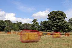 Helen Escobedo Summer Fields