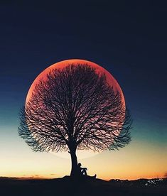 Tag someone you would enjoy this spot with Sunset tree-sun Photo by – All Pictures Moon Photos, Moon Pictures, Nature Pictures, Art Pictures, Sun Photo, Photo D Art, Shoot The Moon, Moon Photography, Travel Photography