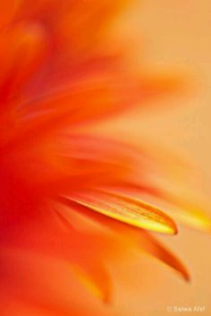 Ladies we will do Orange and yellow for tonight and tomorrow. I hope you all had a great weekend Mellow Yellow, Orange Yellow, Burnt Orange, Orange Color, Orange Shades, Orange Zest, Orange Aesthetic, Aesthetic Colors, Orange Wallpaper
