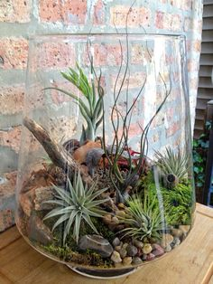 miniature garden in a glass bowl: Ideas for glass terrariums - Little Piece Of Me diy terrarium gardendiy terrarium garden Air Plant Terrarium, Garden Terrarium, Succulents Garden, Planting Flowers, Glass Terrarium Ideas, Terrarium Containers, Air Plants, Indoor Plants, Deco Floral