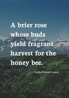 """A brier rose whose buds yield fragrant harvest for the honey bee."" by Letitia Elizabeth Landon printed on high quality matte paper available in different sizes"