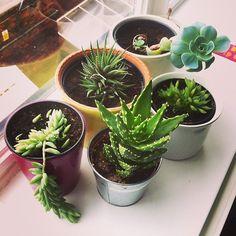 The cari + carl studio succulent garden is growing well! www.cariandcarl.com