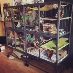 Monster chinchilla cage made from two double Critter Nation cages. Chinchillas, Hamsters, Ferrets Care, Cute Ferrets, Rodents, Hamster Care, Cage Rat, Pet Rat Cages, Pet Cage