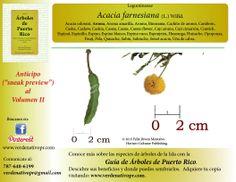 Redescubre nuestro árboles con la Guia de ARboles de Puerto Rico / Redescover the trees of Puerto Rico.