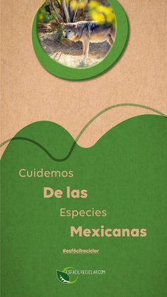 México tiene más de 15,000 especies endémcicas (solo viven aquí). Vamos a cuidar de ellas para presumirlas al mundo. #EsFácilReciclar #UnaAccionUnMundo #PequeñasAcciones #DefiendeAlMundo #MiMundo #OneEarth #3R #Recicla #Reusa #Reduce #Reciclaje #SomosHeroes #Tierra