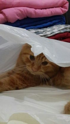 I like plastic bag as my bed