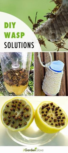 DIY Backyard Wasp Solutions Great Ideas, Tips and Tutorials! Don't let those pests ruin your relaxation and fun time in your own garden/patio.