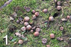 On my way to the hardware store the other day, I got a bit distracted by this pile of acorns that had fallen Fabric Yarn, How To Dye Fabric, Fabric Crafts, Natural Dye Fabric, Natural Dyeing, Shibori, Textile Dyeing, Dyeing Yarn, Dyeing Fabric