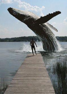 Whale encounter! Run!