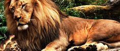 <b>Не обязательно ждать льва </b><br /><i>- В жизни каждого человека наступает его «звездный час»</i>