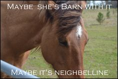 """LOL! Credit goes to me, my horse and photo. ♥  """"Maybe she's barn with it, Maybe it's NEIGHBELLINE"""""""