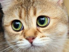 """My kittens look at me like little angels--especially after doing something devilish."" --Jaime Ann Hunt"
