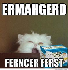 Fun Claw - Funny Cats, Funny Dogs, Funny Animals: Funny Animal Pictures With Captions - 24 Pics