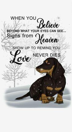 Dachshund Quotes, Dachshund Art, Dachshund Puppies, Daschund, Weiner Dogs, Dog Memorial, Funny Happy, Old Dogs, Basset Hound