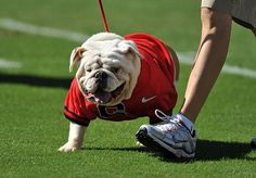 Russ has been promoted to Uga