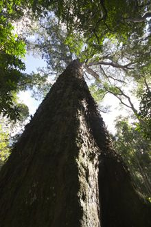 The Big Tree of Tsitsikamma in the Garden Route National Park Desert Biome, Pretty Pictures, Pretty Pics, Seaside Village, Out Of Africa, Top Travel Destinations, Big Tree, Beautiful Places In The World, Countries Of The World
