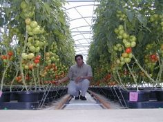 Google Image Result for http://www.planttonic.homehydroponics.info/wp-content/uploads/2009/08/images3.jpg