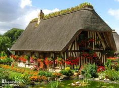 This is a Chaumière (cottage) near Rouen in France. Traditionally the thatched [more thatched homes at www.naturalhomes.org/thatch.htm] roof is topped with a bed of clay where iris are planted. The roots, or rather rhizomes, of the iris helps to mesh together the reed ends in the thatch and remove excess moisture from the ridge. Normandy chaumière often have a flint foundation with half-timbered walls with torches (French cob) on laths (wattle) as the infill.