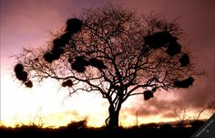 kenya tsavo west national park nature savannah landscape ...