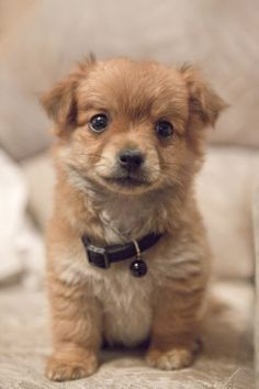 baby animals 4 Baby animals melt my heart (24 photos) --Puppy--
